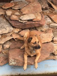 Animal Law - Justie Nicol Criminal Defense Attorney
