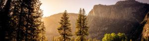 Nicol Law Offices Colorado native company